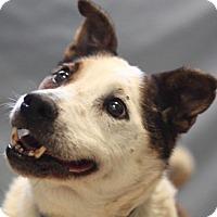 Adopt A Pet :: Mitchell - Naperville, IL