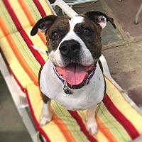 Adopt A Pet :: Mama Liberty - Cleveland, OH
