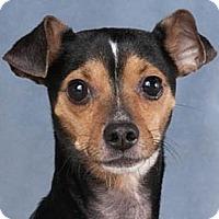 Adopt A Pet :: Macho - Chicago, IL