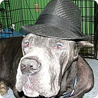 Adopt A Pet :: Rocky - Missouri City, TX