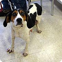 Adopt A Pet :: Silvan - Ludington, MI
