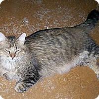 Adopt A Pet :: Jack (O.Neill) - Scottsdale, AZ