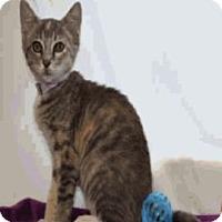 Adopt A Pet :: Chanel - Colorado Springs, CO