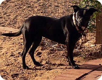 Labrador Retriever Mix Dog for adoption in Rio Rancho, New Mexico - Emma