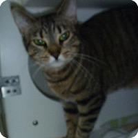 Adopt A Pet :: Rae Ann - Hamburg, NY