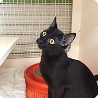 Adopt A Pet :: Sally - Stafford, VA