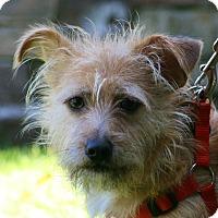 Adopt A Pet :: Maverick - Carlsbad, CA