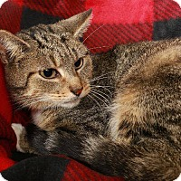 Adopt A Pet :: Enya - shy & snuggly - Madison, TN