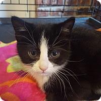 Adopt A Pet :: Mulan - Minot, ND