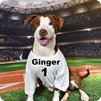 Adopt A Pet :: Ginger HAVE A HEART - Gulfport, MS