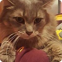 Adopt A Pet :: Moreno - Forest Lake, MN