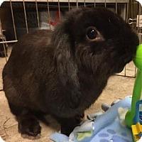 Adopt A Pet :: DJ - Woburn, MA