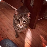 Adopt A Pet :: MICHAEL! - Philadelphia, PA