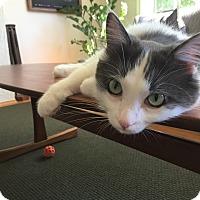 Adopt A Pet :: Montag - Vancouver, BC
