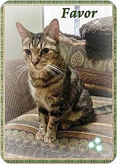 Domestic Mediumhair Cat for adoption in Orange City, Florida - Favor