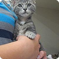 Adopt A Pet :: Chipmunk - Riverhead, NY