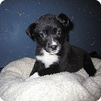 Adopt A Pet :: Jenny - Westbank, BC