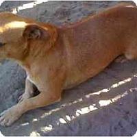 Adopt A Pet :: Biscuit - Fowler, CA