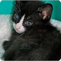 Adopt A Pet :: Johnny - Secaucus, NJ