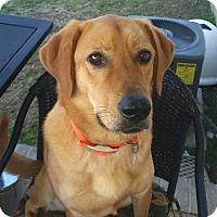 Adopt A Pet :: Ranger - Hartsville, TN