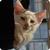 Adopt A Pet :: T.K. - Brooklyn, NY