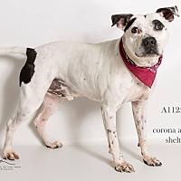 Adopt A Pet :: AUDEN - Corona, CA