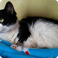 Adopt A Pet :: Pixie - Templeton, MA