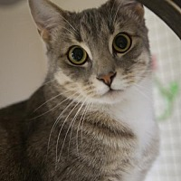 Adopt A Pet :: Grimes - Olive Branch, MS
