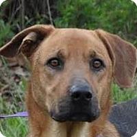 Adopt A Pet :: Errol - Silver Spring, MD