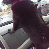 Adopt A Pet :: Cole - Valparaiso, IN