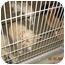 Photo 3 - Golden Retriever Dog for adoption in Harbor City, California - Lancaster Dogs