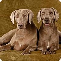 Adopt A Pet :: Mia - Las Vegas, NV