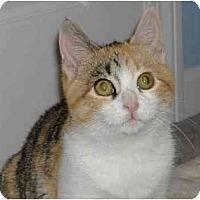 Adopt A Pet :: Beaker - Plainville, MA