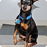 Adopt A Pet :: Pete - Topeka, KS
