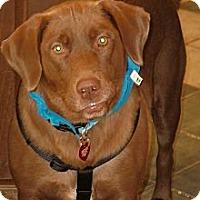 Adopt A Pet :: Truffles - Franklin, TN