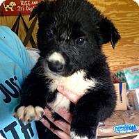 Adopt A Pet :: Brandi - Morgantown, WV