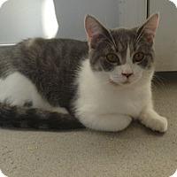 Adopt A Pet :: Hillary - Hamburg, NY