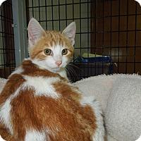 Adopt A Pet :: Claus - Medina, OH