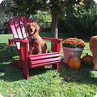 Adopt A Pet :: Toby - Bridgewater, NJ
