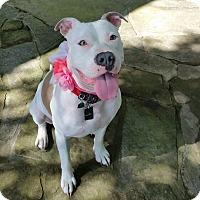 Adopt A Pet :: Annabeth - Bryan, TX