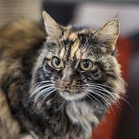 Adopt A Pet :: Sadie Mae - St Helena, CA