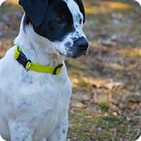 Adopt A Pet :: Jalin - Hainesville, IL