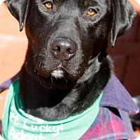 Adopt A Pet :: Joey - Washington, DC