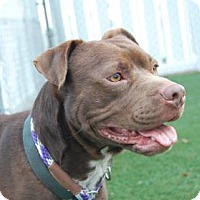 Adopt A Pet :: Peanut - Bradenton, FL