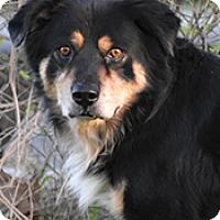 Adopt A Pet :: Max - Jarrell, TX
