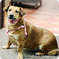 Adopt A Pet :: Mindy *REBOUND* - Appleton, WI