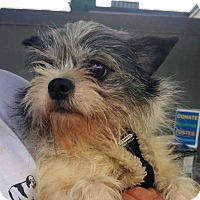 Adopt A Pet :: Candy! *FOSTER NEEDED 4/24* - New York, NY