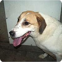 Adopt A Pet :: Meagan - Covington, KY