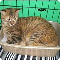 Adopt A Pet :: Mystic - Jacksonville, FL