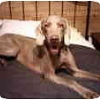 Adopt A Pet :: Princess  **ADOPTED** - Eustis, FL